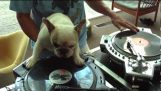 Ο σκύλος DJ