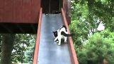 Kocięta na slajdzie