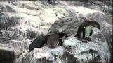 Kötü penguin