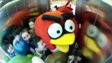 Die wütenden Vögel im Aufzug