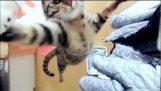 Az ugrások egy macska, a lassú mozgás