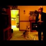 Ένας σκύλος που καταλαβαίνει την νοηματική γλώσσα