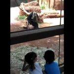 Η έκπληξη του χιμπατζή