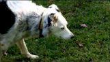 Ο σκύλος που ξέρει χίλιες λέξεις