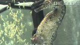 雄性海马的诞生