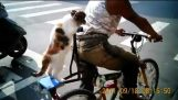 Cat ride on bike