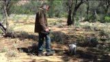 Как захватить кенгуру