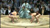 Невеликий, але чудово борець сумо