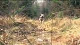 Ο σκύλος που κάνει parkour (2)