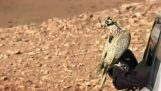 Flyvende med en Falcon