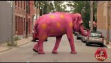惡作劇: 粉紅色大象