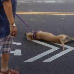 Βοήθεια σε έναν σκύλο με αφυδάτωση