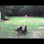 Δύο σκύλοι και ένα μπαλόνι