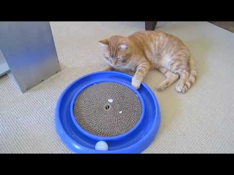 Игра для кошки своими руками