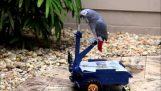 Vozidlo papoušek