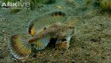 Ryby, které chodí v dolní