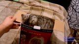 Rozbalení kočka
