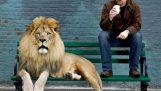 Η ανθρώπινη εξέλιξη και τα λιοντάρια