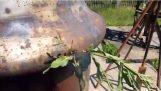 Μπορείς να ακούσεις ραδιόφωνο χρησιμοποιώντας φυτά;