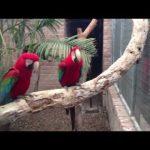 Οι παπαγάλοι έχουν κέφια