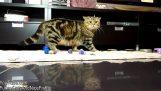 Quando i gatti fanno errori grossolani