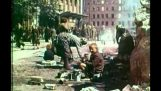 Savaşın sonuçları: Berlin, 1945 14 Mayıs