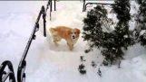 Dificultades en la nieve