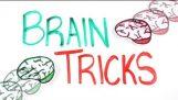 Πως λειτουργεί ο εγκέφαλός μας;