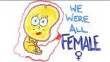 Κάποτε ήμασταν όλοι… θηλυκά