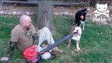 牛头犬和鼓风机