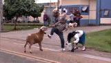RAM ब्राजील रास्ते में लोग terrorizes