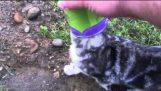 Pomaganje male mace