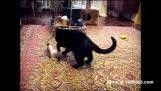Γάτα εναντίον ερμίνας
