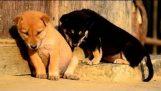 Όταν τα ζώα νυστάζουν…