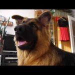 Οι αντιδράσεις ενός σκύλου σε διάφορους ήχους