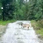 Το πρόβατο που τρόμαξε τον λύκο