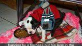 Лечение на кученце с двигателни проблеми