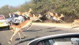 Útočisko v aute turistov