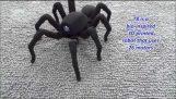 Η ρομποτική αράχνη