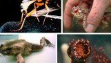 Удивительно животных механизмы обороны
