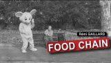 เรมีเกลลาร์ด: ห่วงโซ่อาหาร