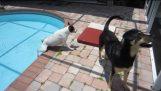 अजीब कुत्तों