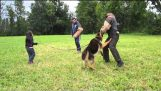 Trained German Shepherd protects a small girl