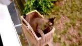 Kedi Asansör