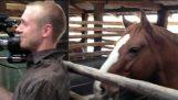Το άλογο πειραχτήρι