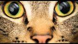 Η όραση των ζώων