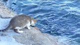 Η γάτα πήγε για ψάρεμα