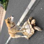 Επιβάτης σε χελώνα
