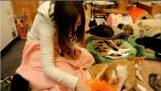 Καφετέριες με γάτες στην Ιαπωνία