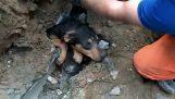 Διάσωση σκύλου που παγιδεύτηκε σε σωλήνα